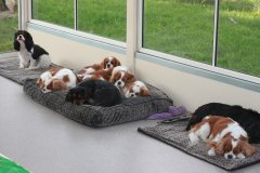 First day in new dog room 005.JPG