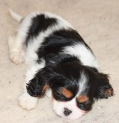 sleepingbeautyphebe8weeks.jpg